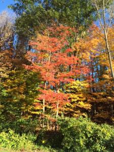 Beautiful Upstate NY Fall