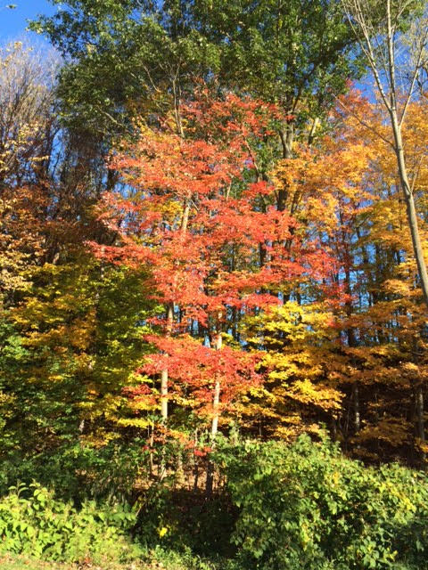 Fall In Beautiful Upstate New York